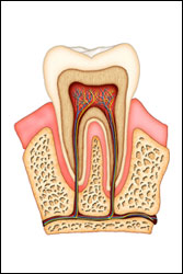 Root Canal Treatment in Suffern, NY